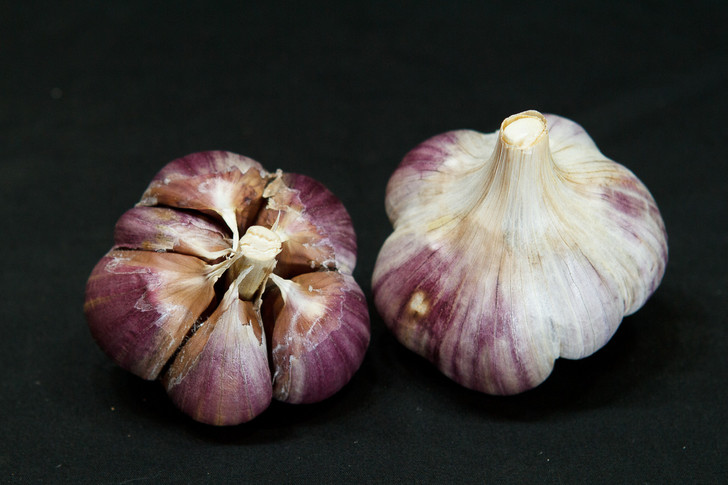 METECHI Bulk Garlic | Filaree Organic Seed Farm