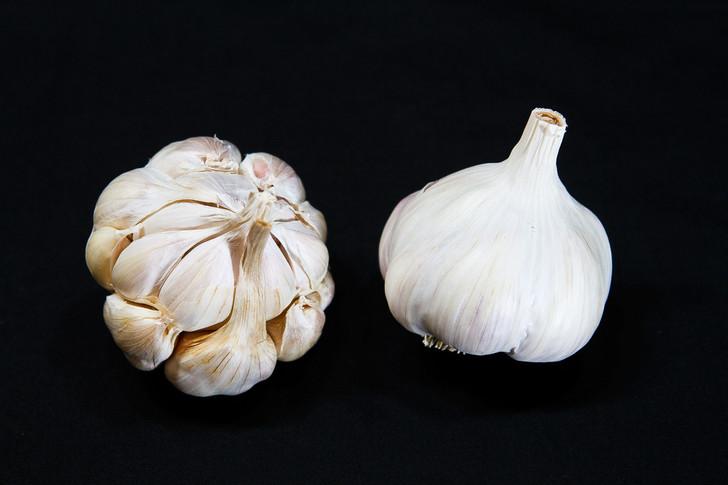 MILD FRENCH  Bulk Garlic | Filaree Organic Seed Farm