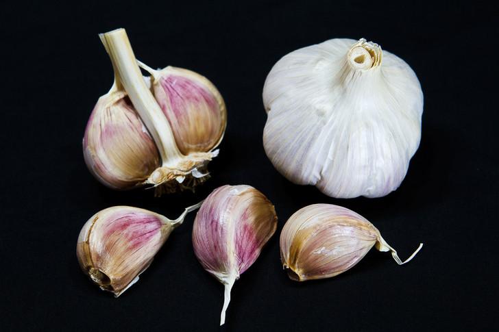 MUSIC Bulk Garlic | Filaree Organic Seed Farm