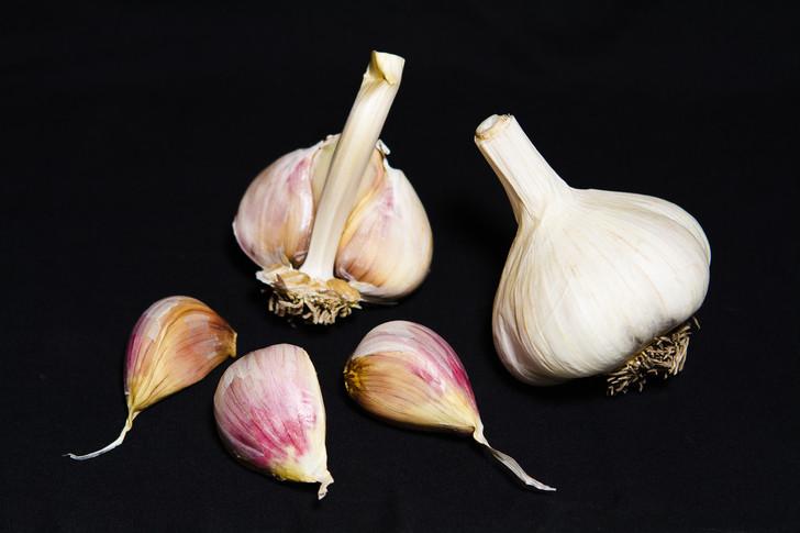 MONTANA ZEMO Bulk Garlic | Filaree Organic Seed Farm