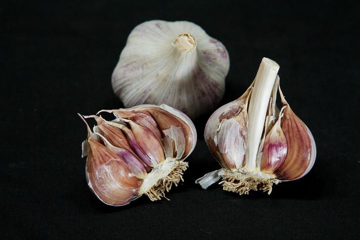 NORTHE Garlic | Filaree Organic Seed Farm