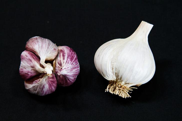 NATIVE CREOLE Garlic   Filaree Organic Seed Farm