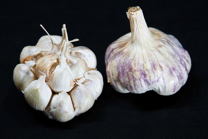 OREGON BLUE Garlic | Filaree Organic Seed Farm
