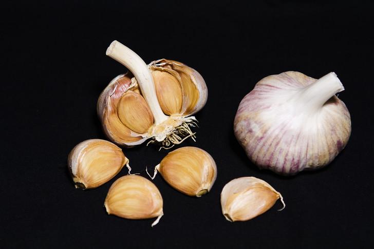 PENASCO BLUE Garlic | Filaree Organic Seed Farm