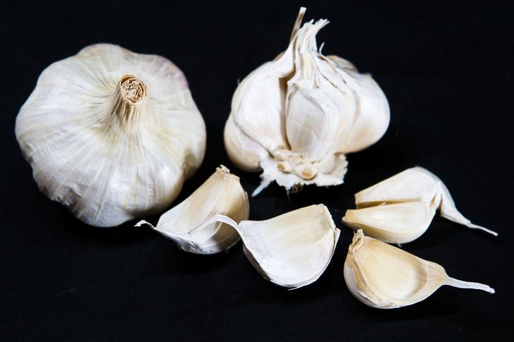 POLISH WHITE  Bulk Garlic | Filaree Organic Seed Farm