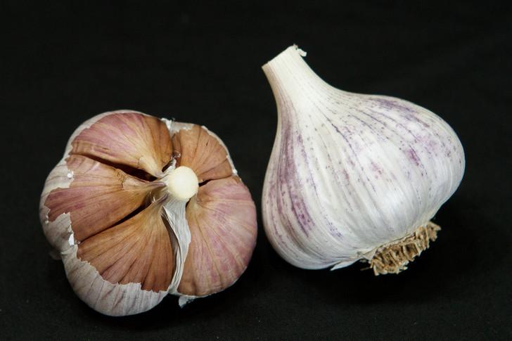 PYONG YANG Garlic | Filaree Organic Seed Farm