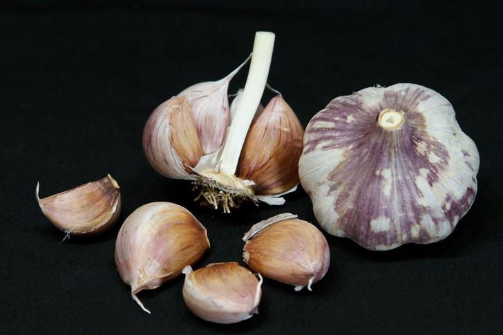 RED JANICE Garlic | Filaree Organic Seed Farm
