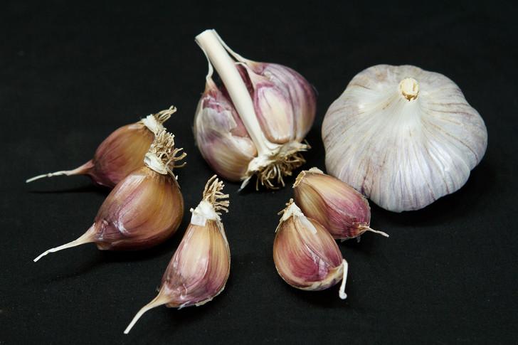 RED REZAN Garlic | Filaree Organic Seed Farm