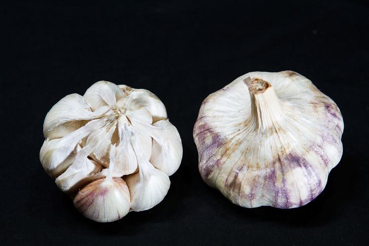RED TOCH  Bulk Garlic | Filaree Organic Seed Farm