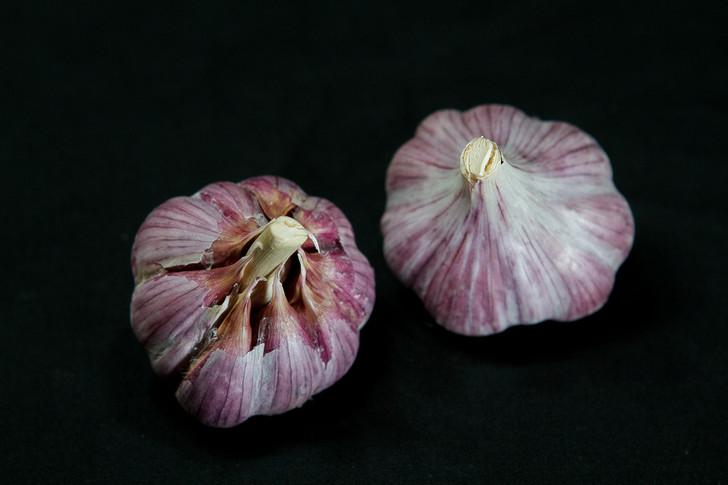 SHATILI Garlic | Filaree Organic Seed Farm