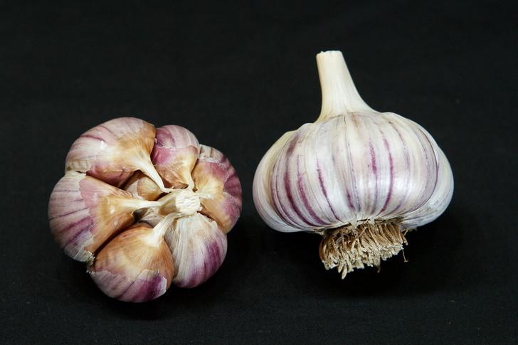 SIBERIAN Garlic | Filaree Organic Seed Farm