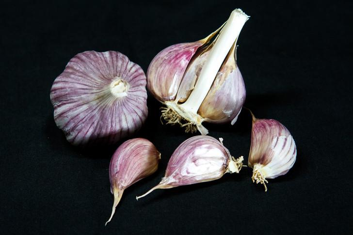 SKURI Garlic | Filaree Organic Seed Farm