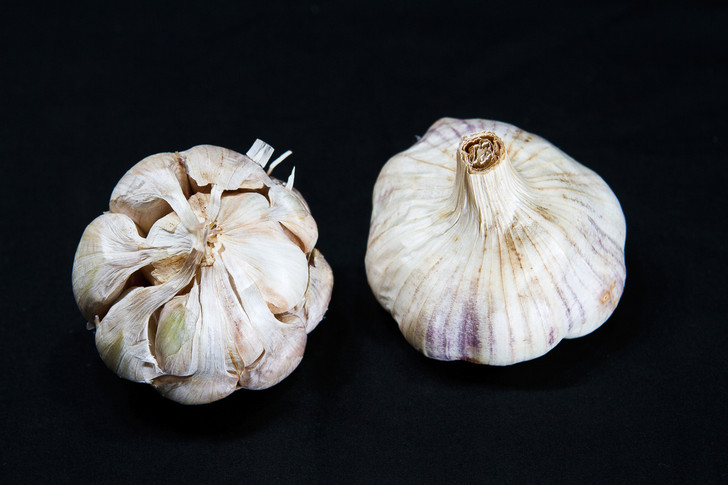 SUSANVILLE Bulk Garlic | Filaree Organic Seed Farm