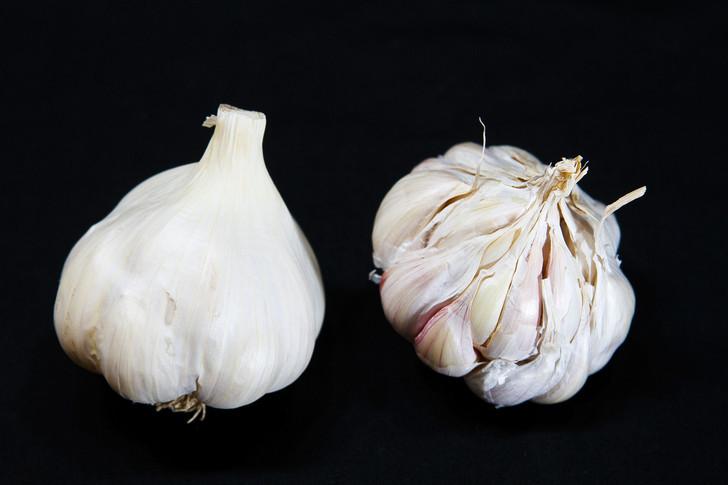 SILVER WHITE  Bulk Garlic | Filaree Organic Seed Farm