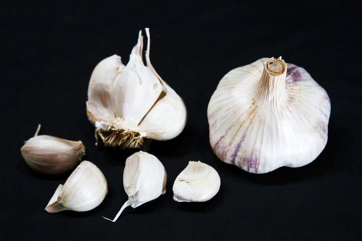 THERMADRONE Garlic | Filaree Organic Seed Farm