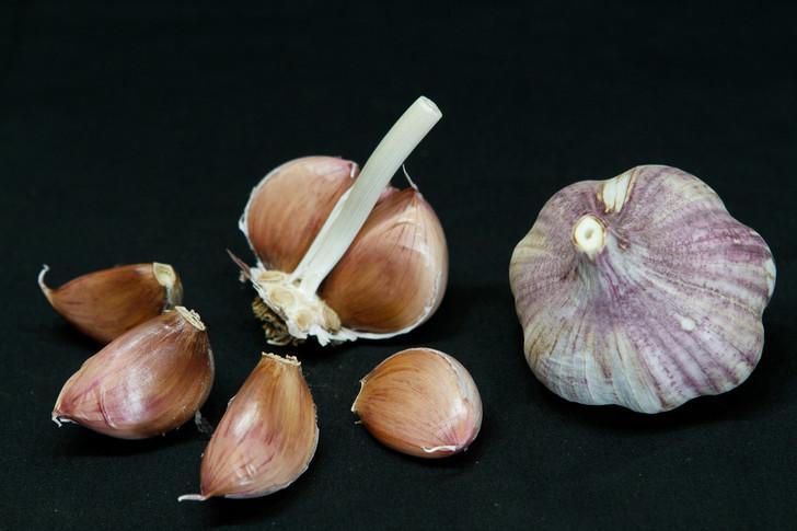 THAI PURPLE Bulk Garlic | Filaree Organic Seed Farm