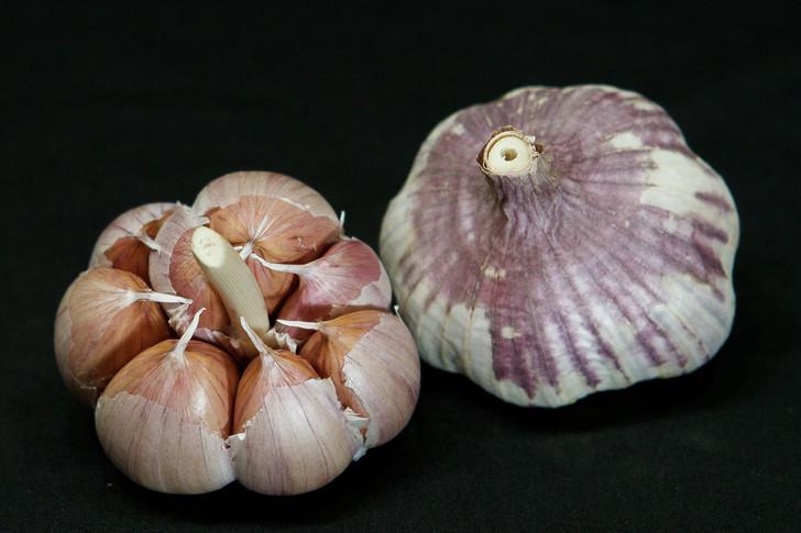 UZBEK Garlic | Filaree Organic Seed Farm