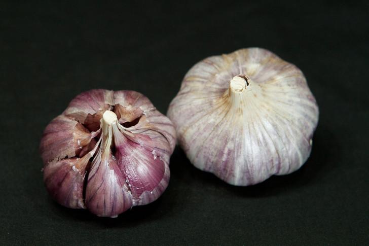 VEKAK Garlic | Filaree Organic Seed Farm