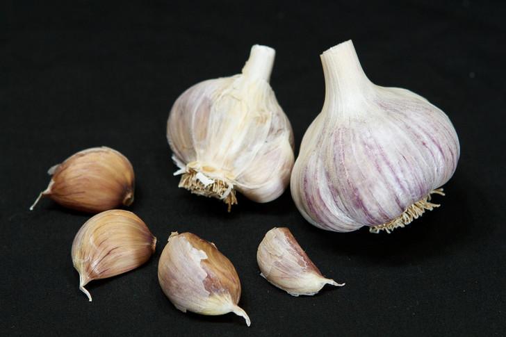 YUGOSLAVIAN Garlic   Filaree Organic Seed Farm