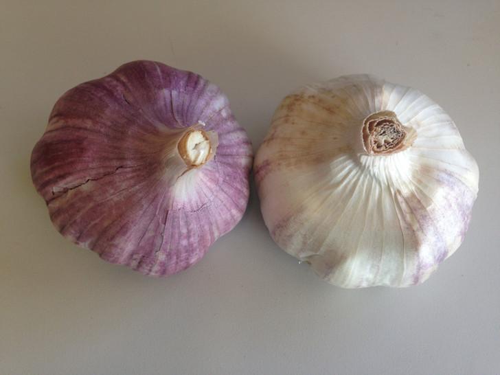 Small Starter Pack Organic Garlic Seed
