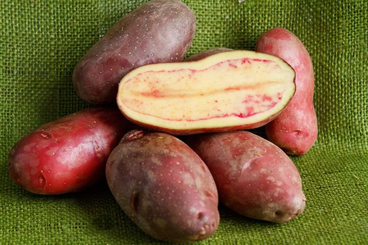 French Fingerling Potato   Filaree Organic Seed Farm