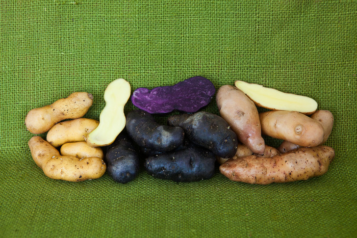 Fingerling Potato Pack | Filaree Organic Seed Farm