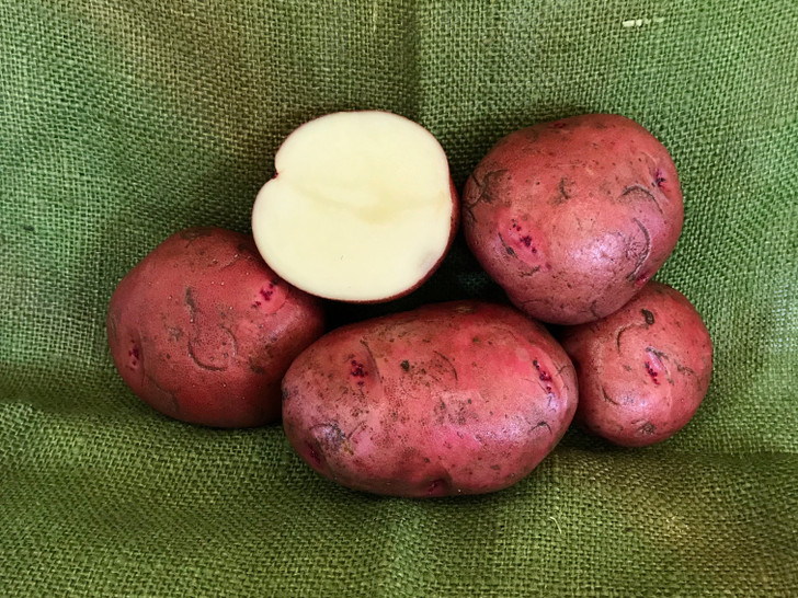 Red Chieftan Organic Potato Seed