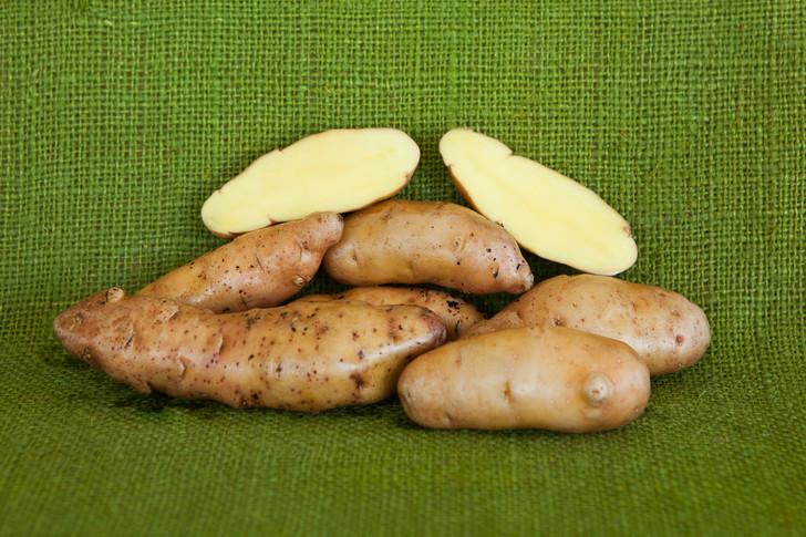 Rose Finn Fingerling Potato | Filaree Organic Seed Farm