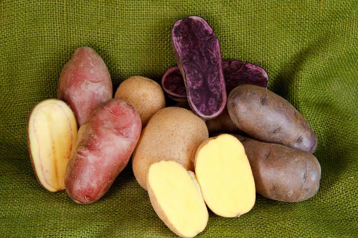 Small Potato Garden Pack | Filaree Organic Seed Farm