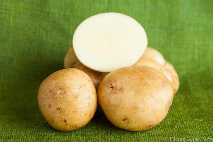 Yukon Gold Potato Organic Seed