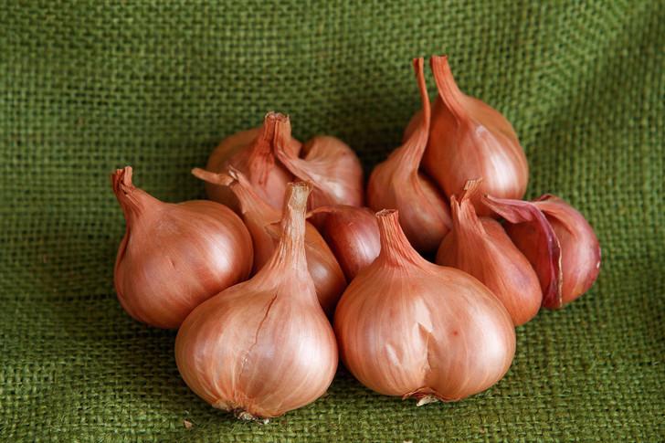 Dutch Red Shallot Garlic   Filaree Organic Seed Farm