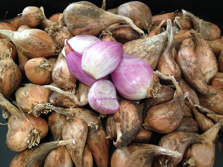 French Grey Shallot Organic Garlic Seed
