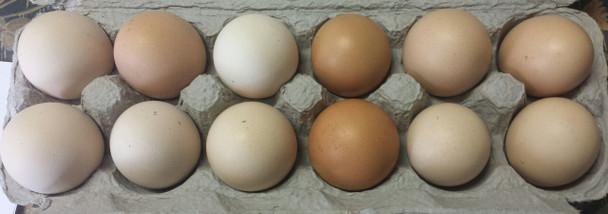 Organic Soy-Free Chicken Eggs, 1 Dozen