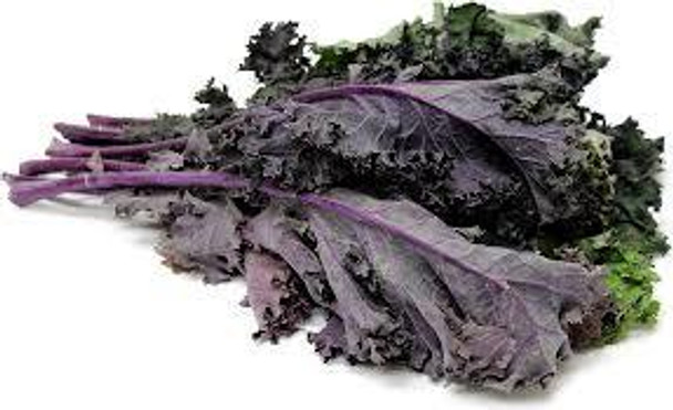Organic Red Russian Kale from Burkholder farm