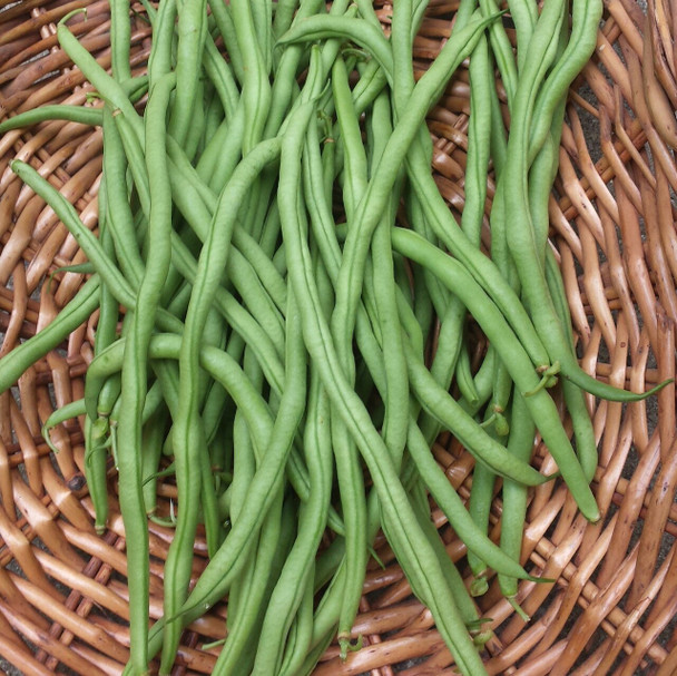 Organic Green String beans from Jersey Hollow farm 1lb