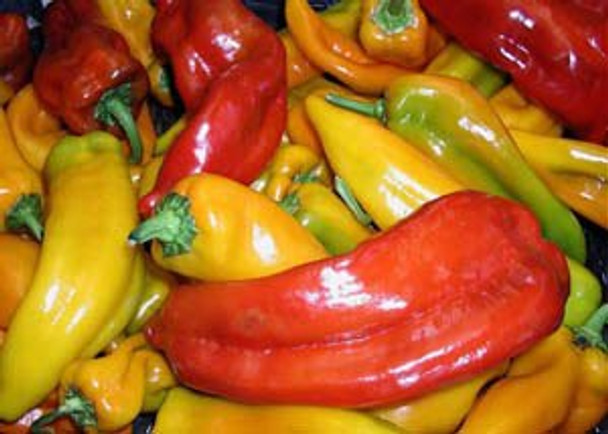Organic Sweet Multicolored Bell Peppers 1 qt