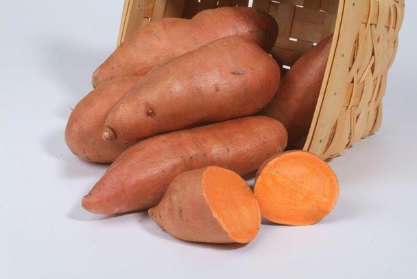 Organic Orange Sweet Potatoes from Jersey Hollow Farm 2 lb