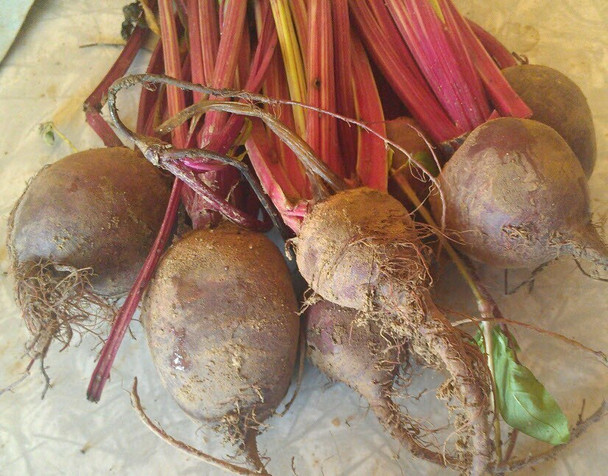 Red Beets Bunch Organically grown from Burkholder's Farm  (1 bunch)