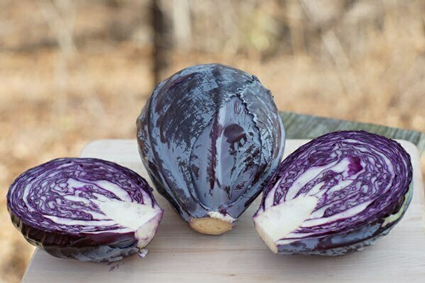 Organic Red Cabbage, Jersey Hollow ( Sold per head 2-3 lb each)