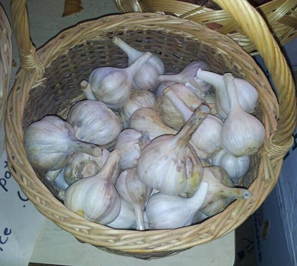 Fresh Organic Garlic from Jersey Hollow (8oz)