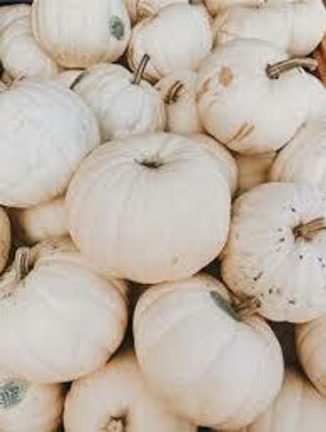 Caprina  Pumpkin  (Sold By The Each)