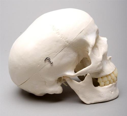 Harvey Skull 2nd Class