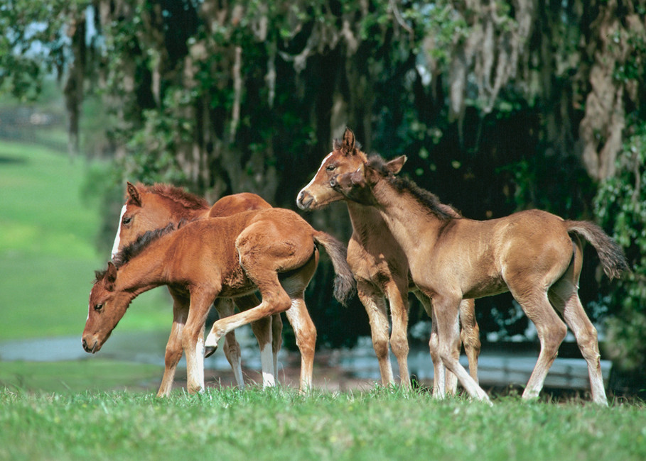 Is your foal getting what he needs to thrive?
