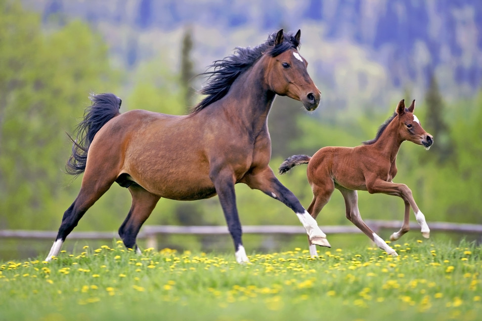 Promoting Healthy Immune Systems in Both Mare and Foal