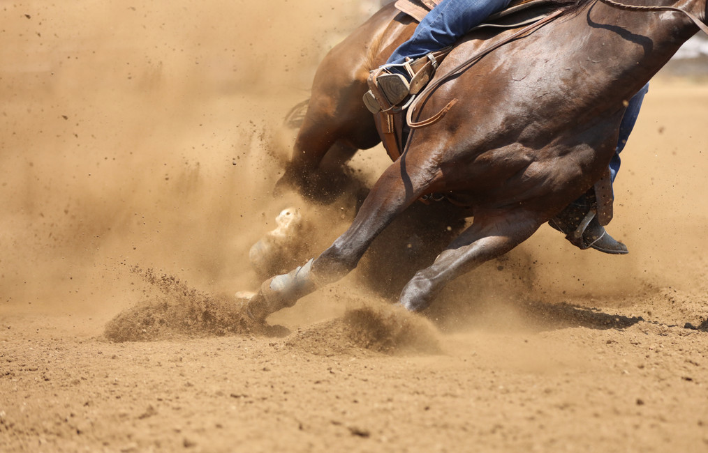 Horse Health: Common & Historical Horse Liniment Ingredients and Their Functions