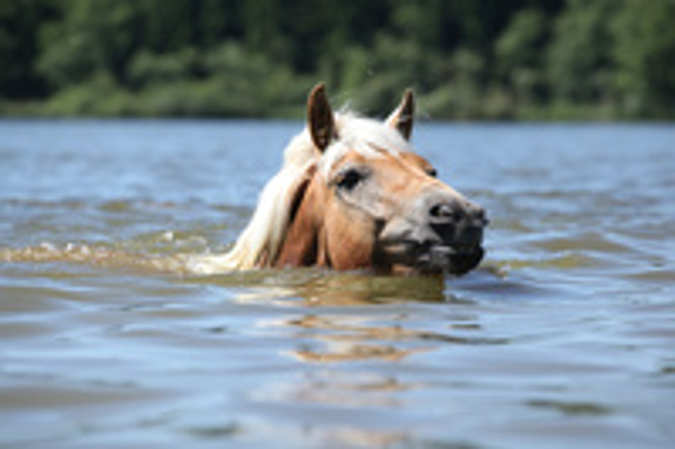 AQUATIC THERAPY, IT'S NOT JUST FOR HUMANS ANYMORE