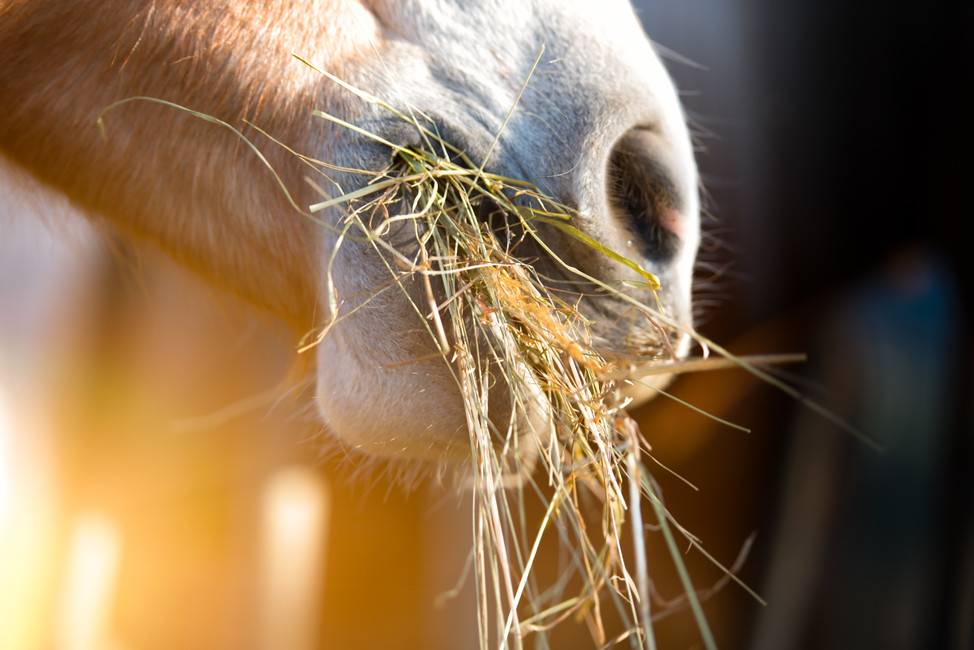 What Probiotics & Prebiotics Can Do for Your Horse