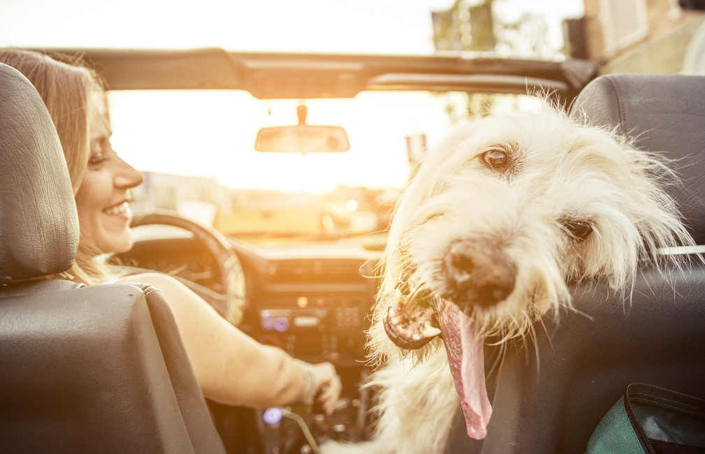 Road Trips With Man's Best Friend: Tips and Tricks