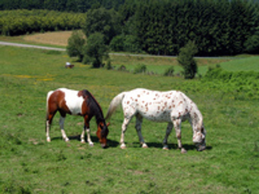 Sunburns and Horses: What You Need to Know to Keep Your Horse Protected