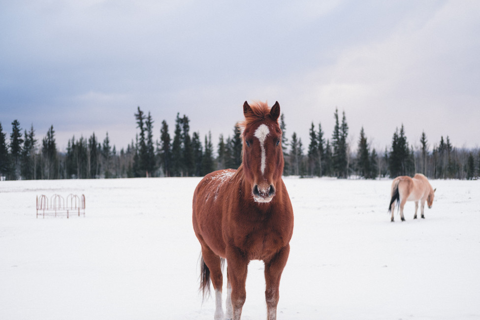 Five Ways to Keep Your Horse Healthy This Winter